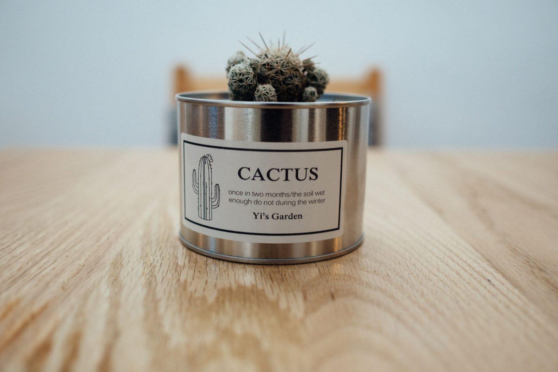 Cactus in metal tin.